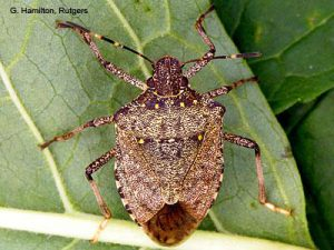 stink bugs Pest Shield Inc